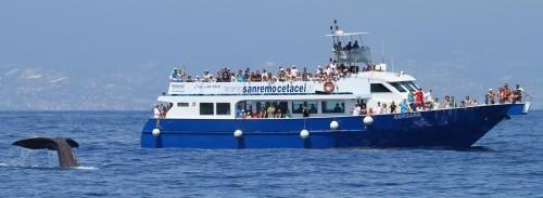Avvistamento Cetacei Mar Ligure